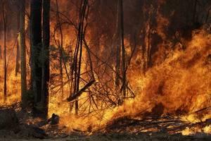 australian bushfires merge into 'mega blaze' as weather worsens