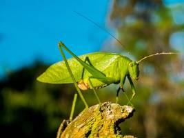 huge swarm of grasshoppers splatter plane cockpit, force pilots to abandon landing and divert (photos)