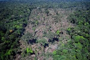 deforestation in brazil's amazon up 85% in 2019