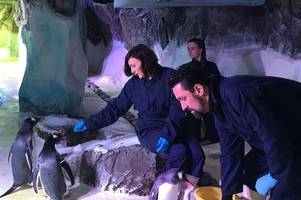 strictly come dancing's shirley ballas and partner daniel taylor enjoy date birmingham's sea life centre