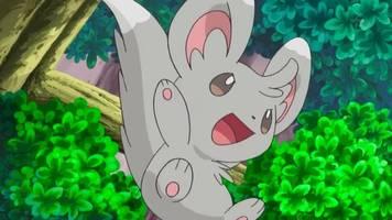 pokémon go's lunar new year event adds minccino and darumaka