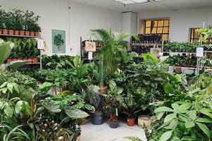 Four thousand plants are coming to Stokes Croft for a 'pop-up jungle'