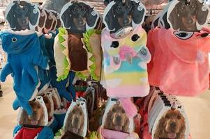 primark is selling an adorable clothing range for dogs