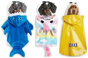 primark launches adorable clothing range for dogs with prices starting at £5