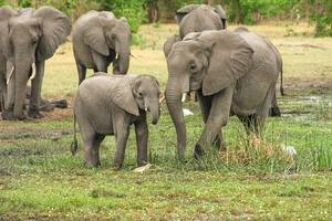 botswana auctions permits to hunt elephants to ease human-wildlife conflict
