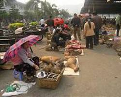 bat for sale at indonesia's wildlife market despite virus warning