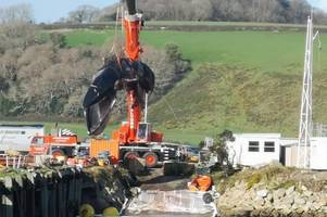 whale that died on cornish beach is brought back ashore