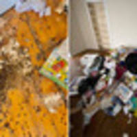 human poo: landlord left with $22k bill after nightmare tenants leave behind mess