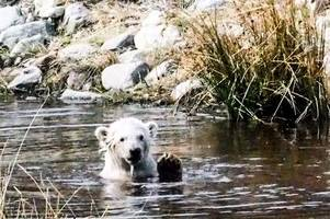 celebrating international polar bear day with wee hamish's best moments