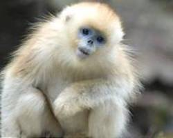 Why coronavirus could help save China's endangered species