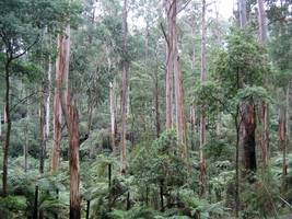 critical gaps uncovered in australian climate change research