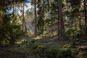 un: forests absorb about 2b tons of carbon dioxide annually