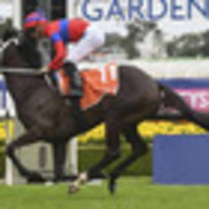 horse racing: kiwi connections shine at rosehill