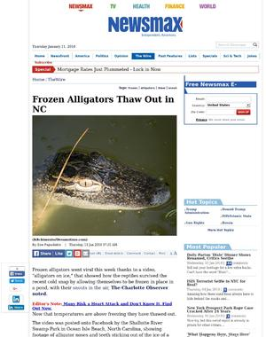 Frozen Alligators Thaw Out in NC